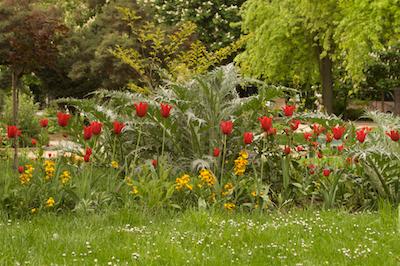Grand Palais Tulips