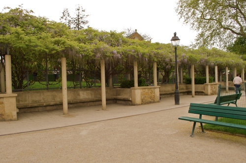 Wisteria in Parc de la Turlure