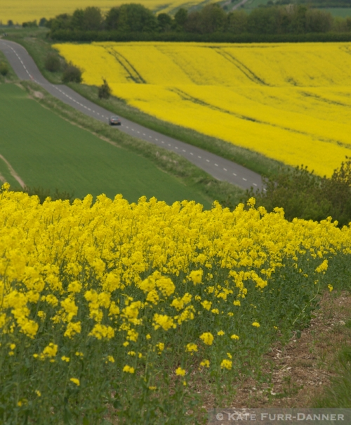 Rapeseed Fields 2