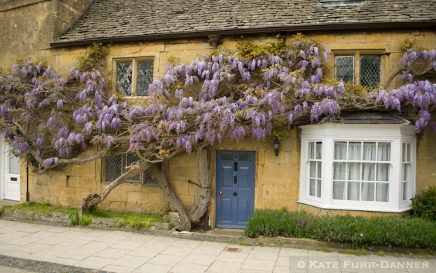 Wisteria and Yellow Stone