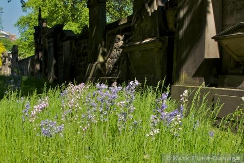 St Cuthbert Bluebells
