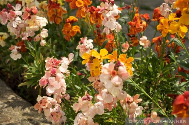 Broadway Flowers